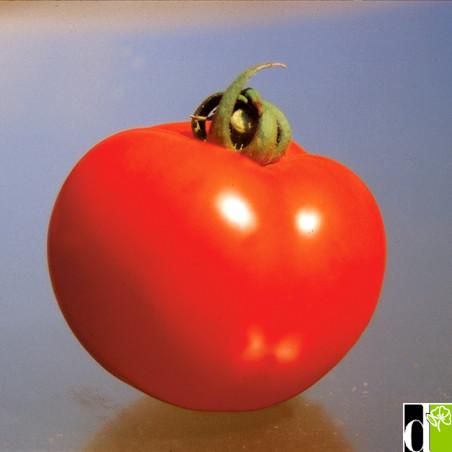 Tomate Ferline F1 0.06g