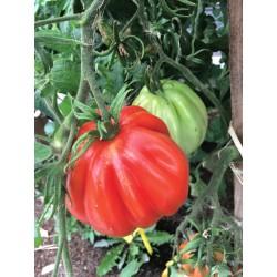 Tomate Liguria bio 0,18g