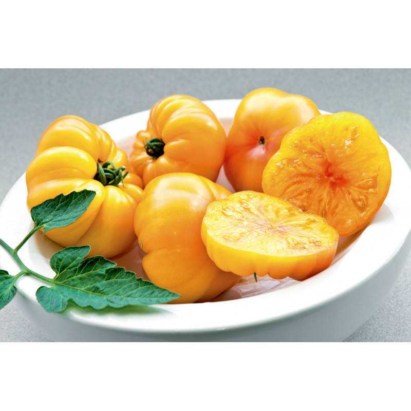 Tomate Margold HF1  - 10 graines