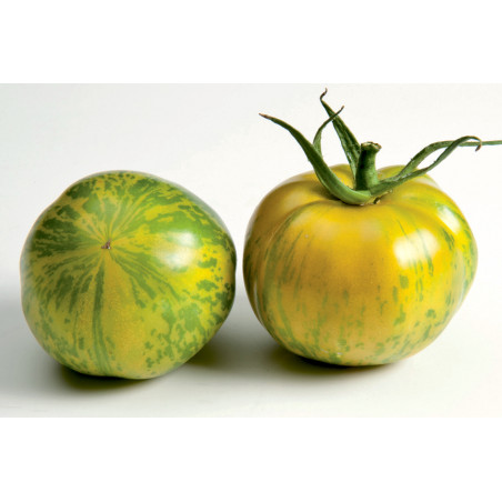 Tomate Tiverta HF1 - 10 graines