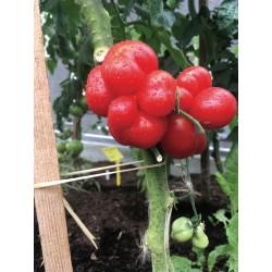 Tomate Voyage bio 0,12g