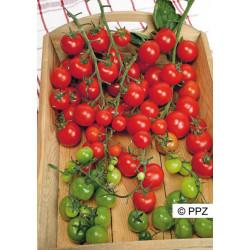 Tomate Cerise 0,07g