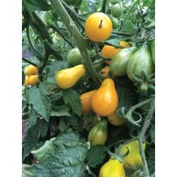 Tomate Yellow Pearshaped bio 0,25g