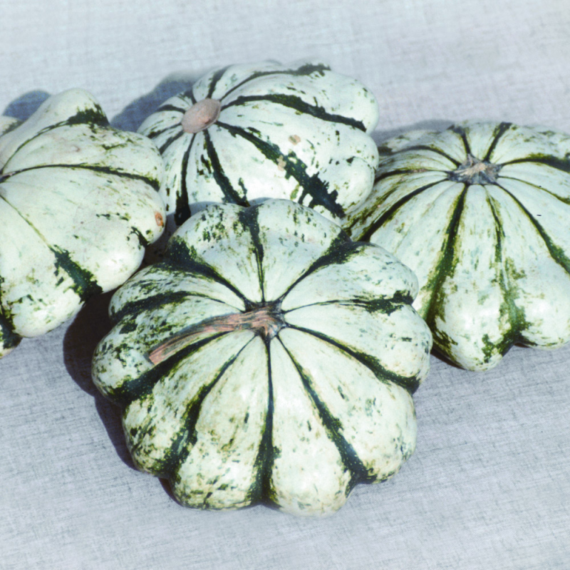 Courge Pâtisson Vert Panaché de Blanc bio 1g