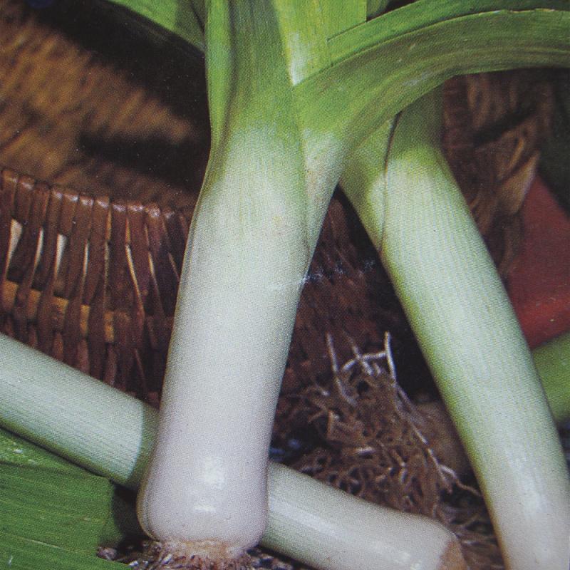 Poireau d'été Jaune Gros du Poitou bio 2g