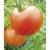 Tomate Karos bio 0,25g
