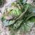Laitue d'hiver rougette de montpellier bio 1g