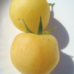 Tomate Pêche bio 0,2g