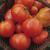 Tomate Merveille des Marchés bio 0,25g