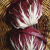 Chicorée sauvage Palla Rossa 2 bio 1g