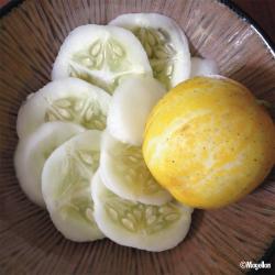 Concombre Lemon bio 1g