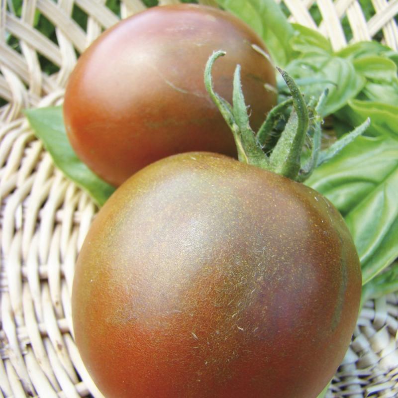Tomate Black Prince bio 0,1g