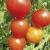 Tomate Miel du Mexique bio 0,25g