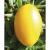 Tomate Téton de Vénus Jaune bio 0,2g