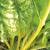 Poirée Bright Yellow bio 2g