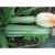 Courgette Costates Romanesco bio 2,5g