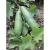 Concombre Persika bio 0,5g