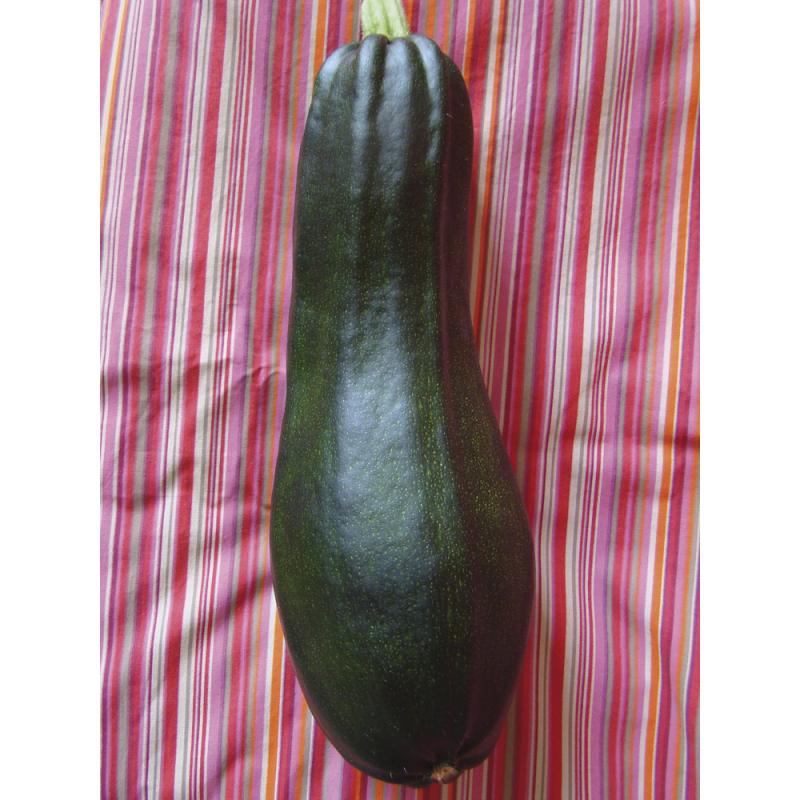 Courgette Verte Noire Maraîchère bio 1,2g
