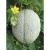 Melon Retato Degli Ortolani bio 1g
