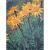 Arnica montana bio 0,2g