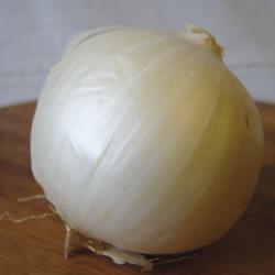 Oignon blanc de Lisbonne bio 2g