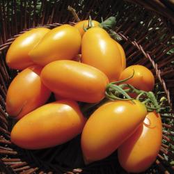 Tomate Orange Banana bio 0,25g