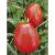 Tomate Rio Grande bio 0,25g