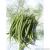 Haricot mangetout saxa bio 50g