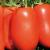 Tomate Incas F1 bio (20 graines)