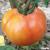 Tomate Velocity F1 bio (10 graines)