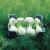 Fenouil Rondo F1 bio (150 graines)