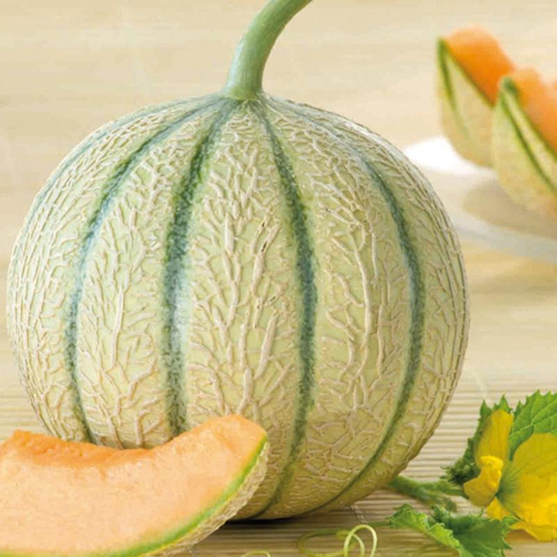 Melon Arisona F1 bio (15 graines)