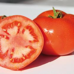 Tomate Brenda F1 bio (10 graines)