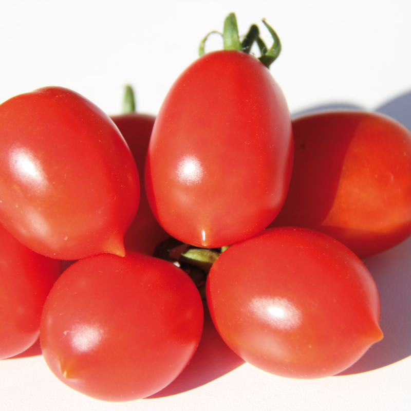 Tomate Prince Borghese bio 0,4g