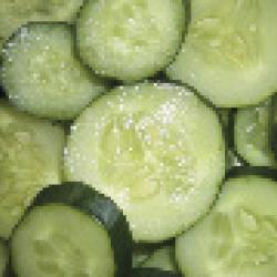 Concombre Burpless Tasty Green F1 0,5g