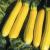 Courgette Parador F1 (10 graines)