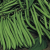Haricot nain Safari 50g