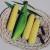 Maïs doux Earlybird F1 (100 graines)