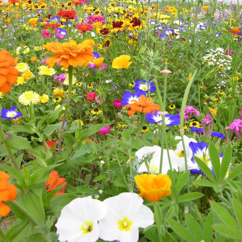 Tapis de fleurs basses 250g