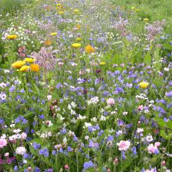 Cascade de fleurs hautes 250g