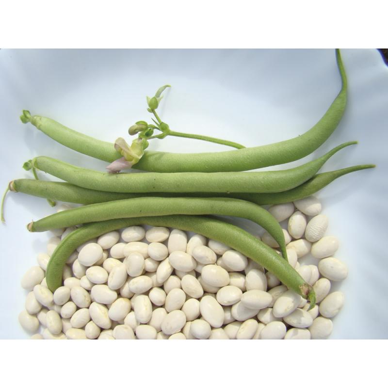 Haricot Coco Nain Blanc bio 50g