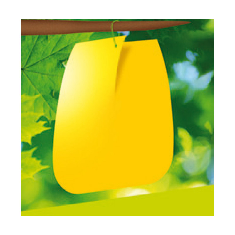 7 pièges à glu jaunes contre mouche de cerise