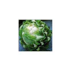 Chou-fleur Triomphant F1 25 graines