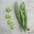 Fève Masterpiece Green Longpod 50g