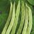 Haricot à rames Hunter 50g