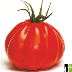 Tomate Corazon F1 10 graines