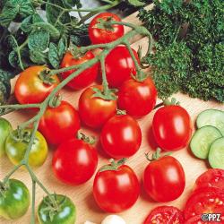 Tomate Tiny Tim 0.09g