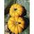 Courge Jack Be Little bio 0,68g
