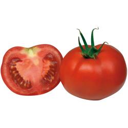 Tomate Maestria F1 Bio 8 graines