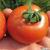 Tomate Prévia F1 Bio 8 graines
